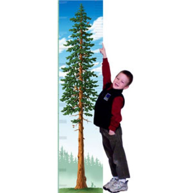 Redwood Growing Tree Chart